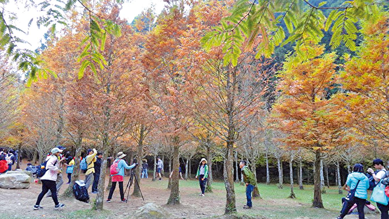 杉林溪森林生態園區秋景異常美麗。