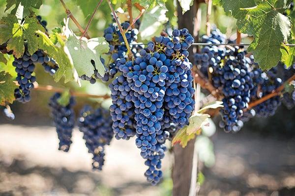 美格魯吉亞機構擬在火星種葡萄