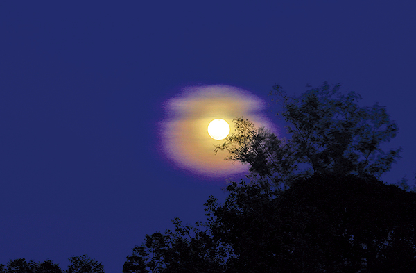 窗外,圓圓的月亮高掛在那棵龍眼樹梢,月光灑進廳裏來(123RF)
