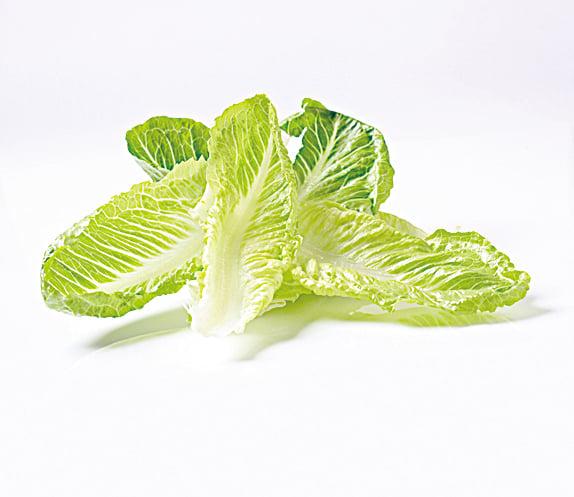 長葉生菜又可稱為羅馬生菜,維他命含量高。