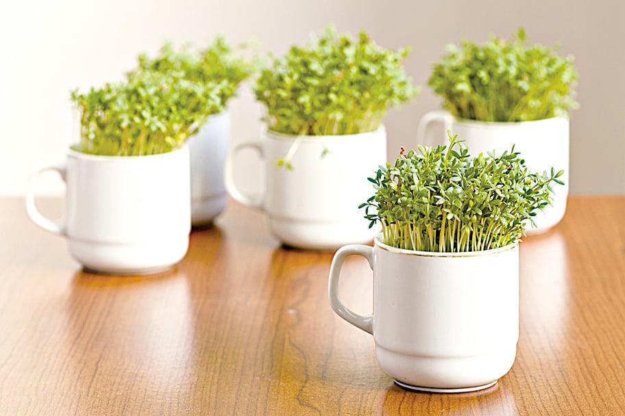 西洋菜很適合家庭種植,常吃可預防2型糖尿病。