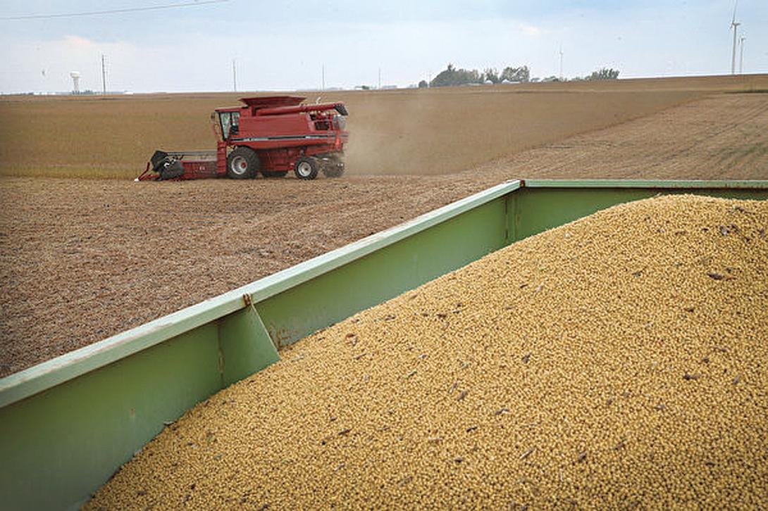 自上周在第一階段貿易會談以來,美國沒有對華銷售任何大豆產品,美國農業部也沒有證實任何購買行為。(Scott Olson/Getty Images)