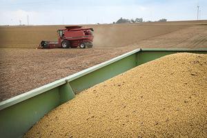 談判後中共從巴西買豆 美國沒接到訂單