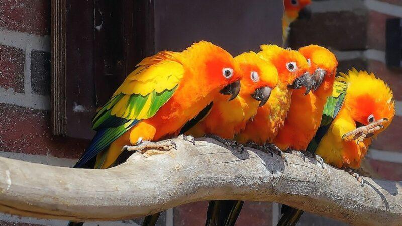 走私客海關被擒 13隻鸚鵡成最萌「證人」