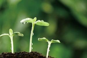 沒有大腦卻會風險評估植物的智能被低估