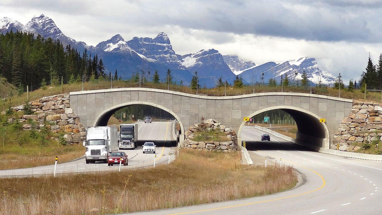 加拿大班夫國家公園的野生動物橋。(Wikimedia commons)