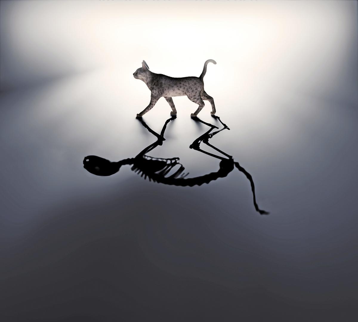 薛定諤貓的生死量子疊加態示意圖。(Shutter Stock)