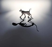 新研究窺探 薛定諤貓生死疊加量子態