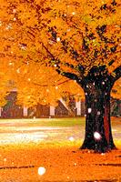 【人生絮語】秋天的讚歌