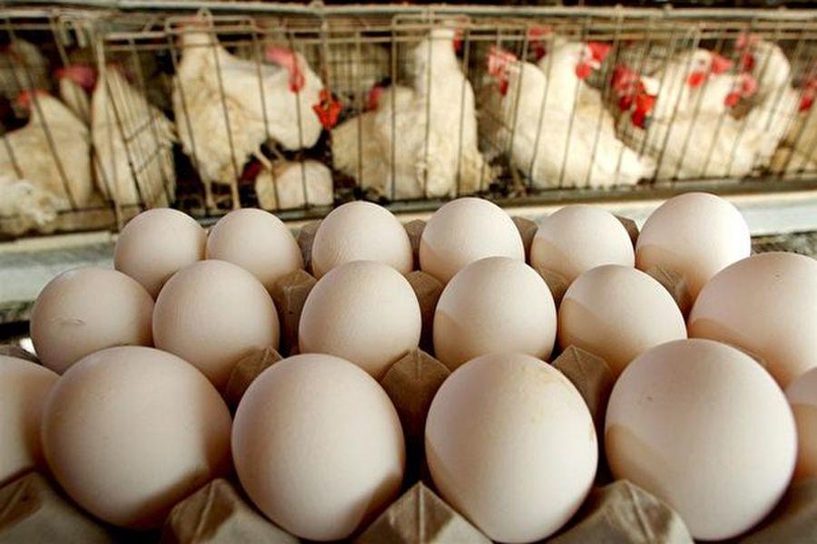 大陸豬肉價一周上漲11%。雞蛋成主要蛋白質替代品,蛋價在一星期內急增14.82%,同比升40%。圖為示意圖。(David Silverman/Getty Images)