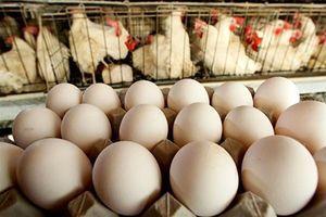 大陸豬肉價一周漲11% 雞蛋價也飆升14%