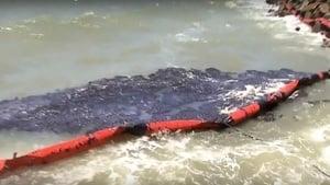 巴西浮油污染困擾三個月 擴及座頭鯨保育區