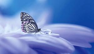 夢蝶、青衿、尺素……不懂這些典故,你的詩詞可就白讀了