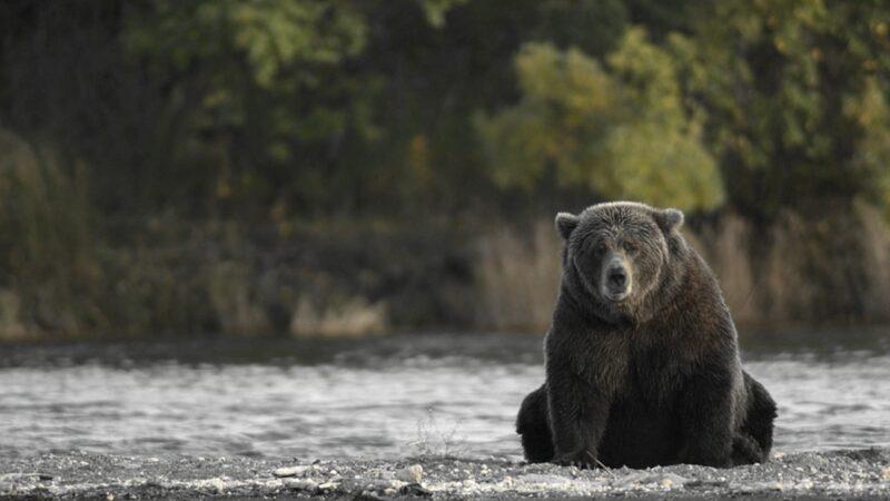三黑熊公路搶救受傷小熊 女車主心碎高喊「快救走孩子」