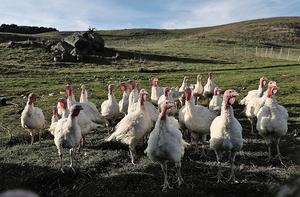 中共解除美禽肉進口限制