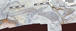 最新的化石研究鬆動了進化論脆弱基石