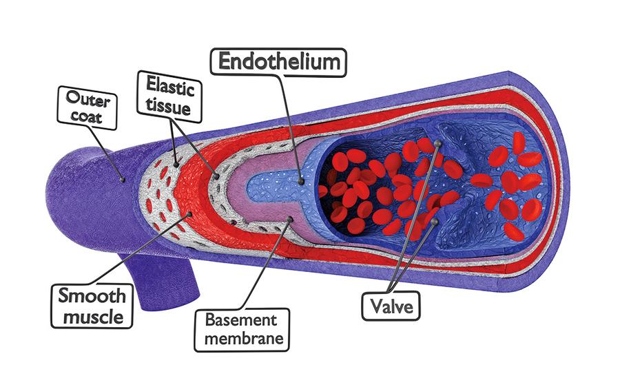 模擬人類微血管新技術三維打印高效散熱器