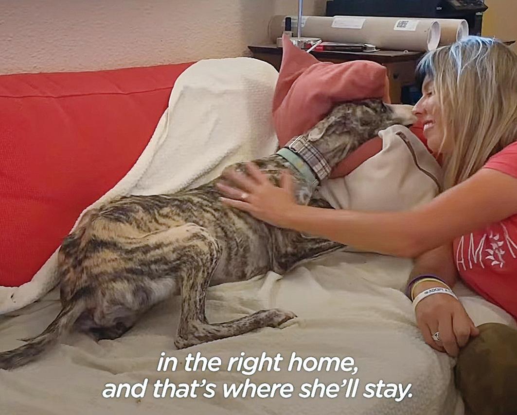 (上圖)狗狗到了新家後得到主人的照顧,不再害怕了,體重也增加了。(the Dodo 影片截圖)