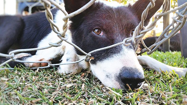 參議院通過的新法案把虐待動物列為聯邦重罪,會受到罰款和最高 7 年的徒刑。(Getty Imgaes)