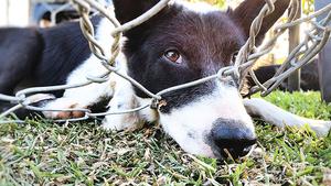 參院通過法案 列殘害動物為聯邦重罪