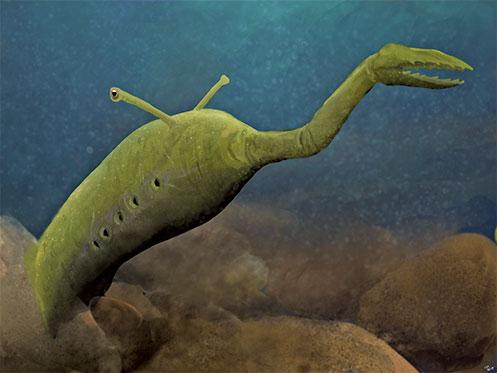 塔利怪物化石新發現 謎上添謎