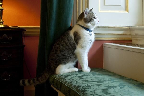 卡梅倫周三離開首相府 這隻貓他帶不走