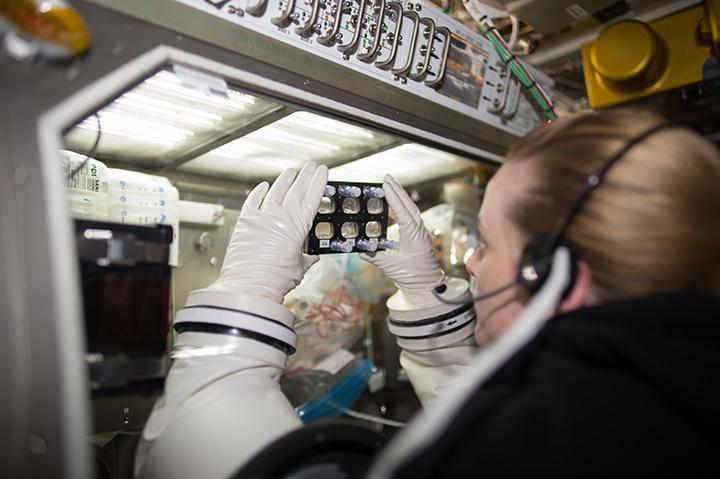 太空人正在太空站檢視一些心肌細胞。(NASA)