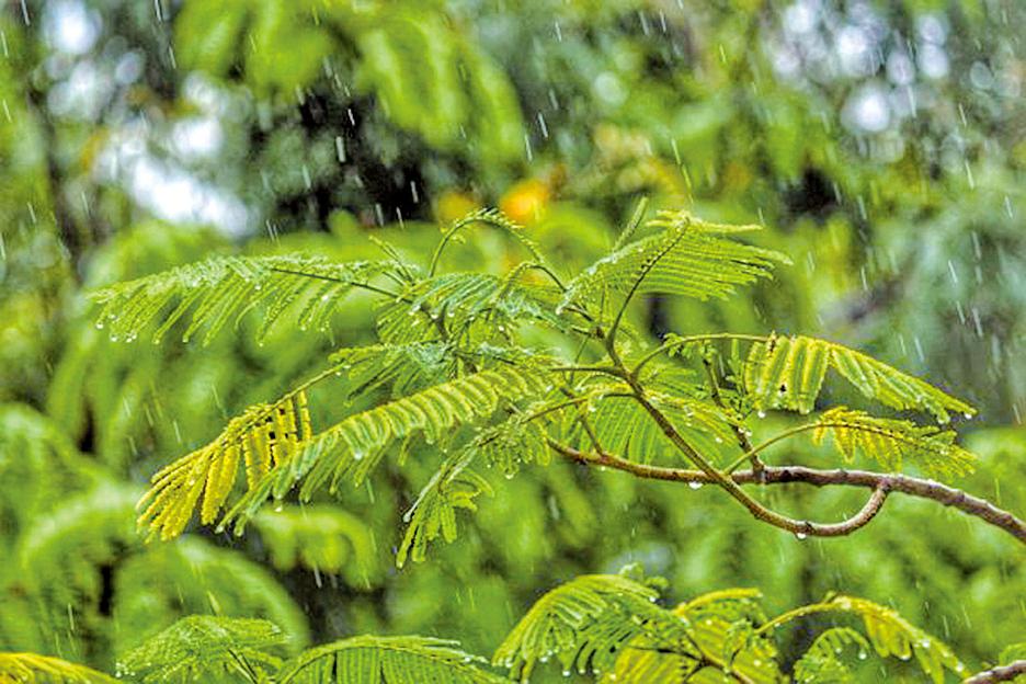 秋雨綿綿,是柔美,是緩慢,是細膩……(Unsplash)