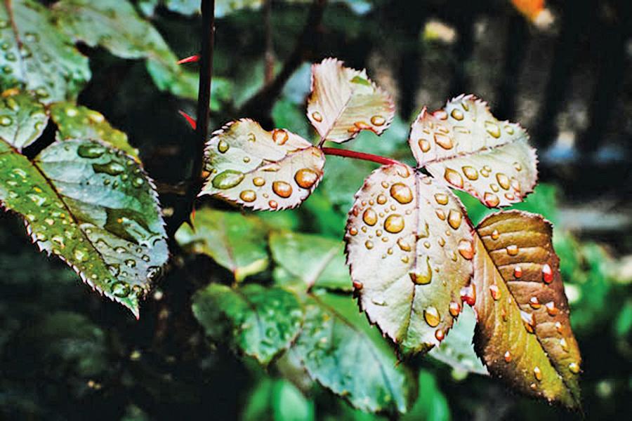 秋雨綿綿,雨落成詩,你身邊的雨,下成了哪首詩?