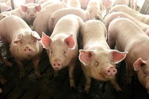 抓雞拆豬圈 中共環保暴政惹民怨