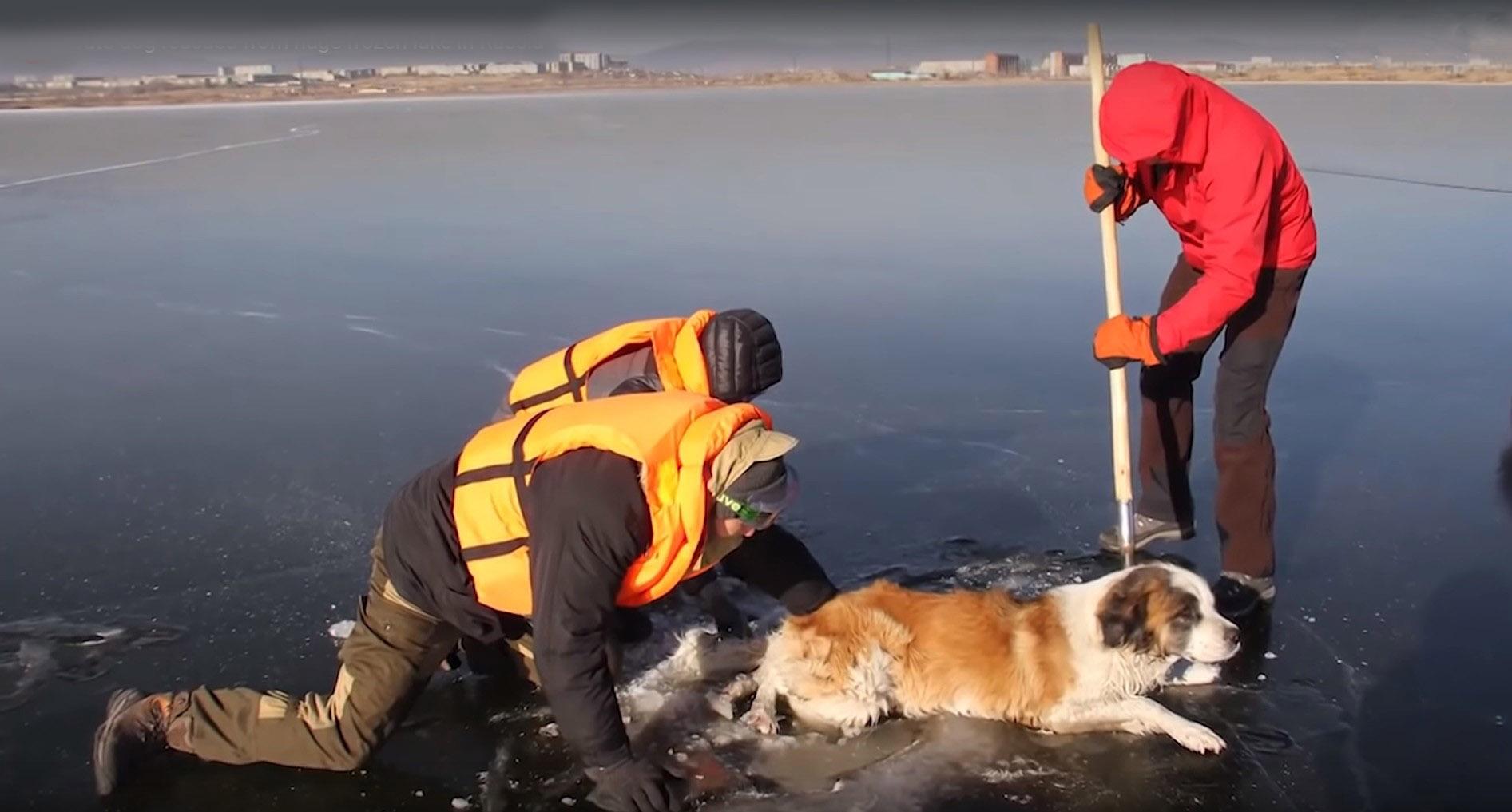 (上圖、左圖)俄羅斯救援人員冒著生命危險,在隨時都有破碎可能的結冰湖面,救援被冰困的狗狗。(影片截圖)