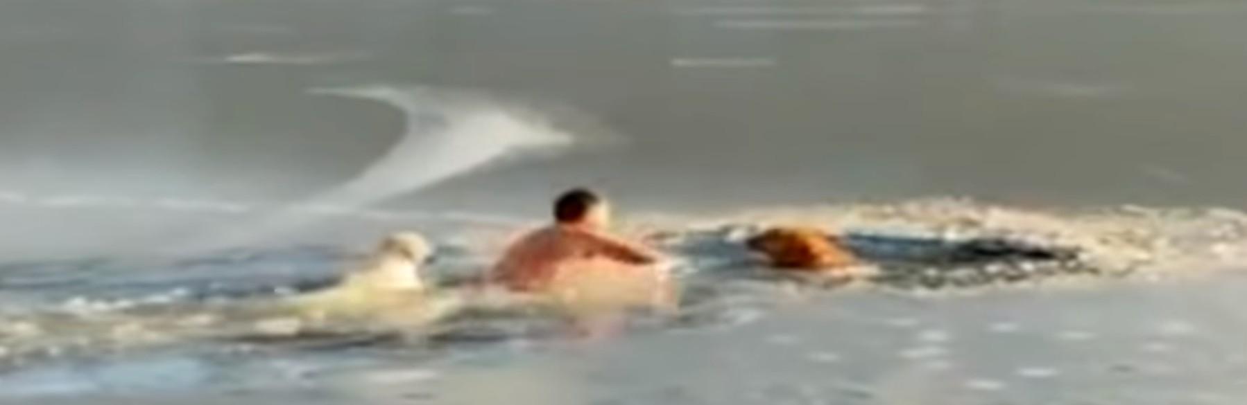(左圖)尤里耶夫看到狗狗跌入結冰的湖中,馬上脫去衣服,走入湖中救狗,他的愛犬Kira也緊隨其後。(影片截圖)