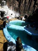 企鵝群中出現「假企鵝」 聰明夜鷺天天混飯吃