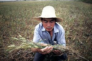 貿易戰下中國面臨糧食危機