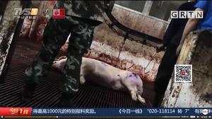 大陸記者暗訪不法屠宰場 每天數千斤黑豬肉流入市場