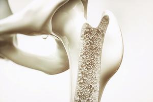 骨骼結構機密啓發新型堅固輕盈材料