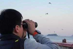 麻鷹公眾普查 關注鳥類保育