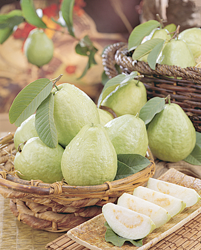 正在流行的超級水果──番石榴