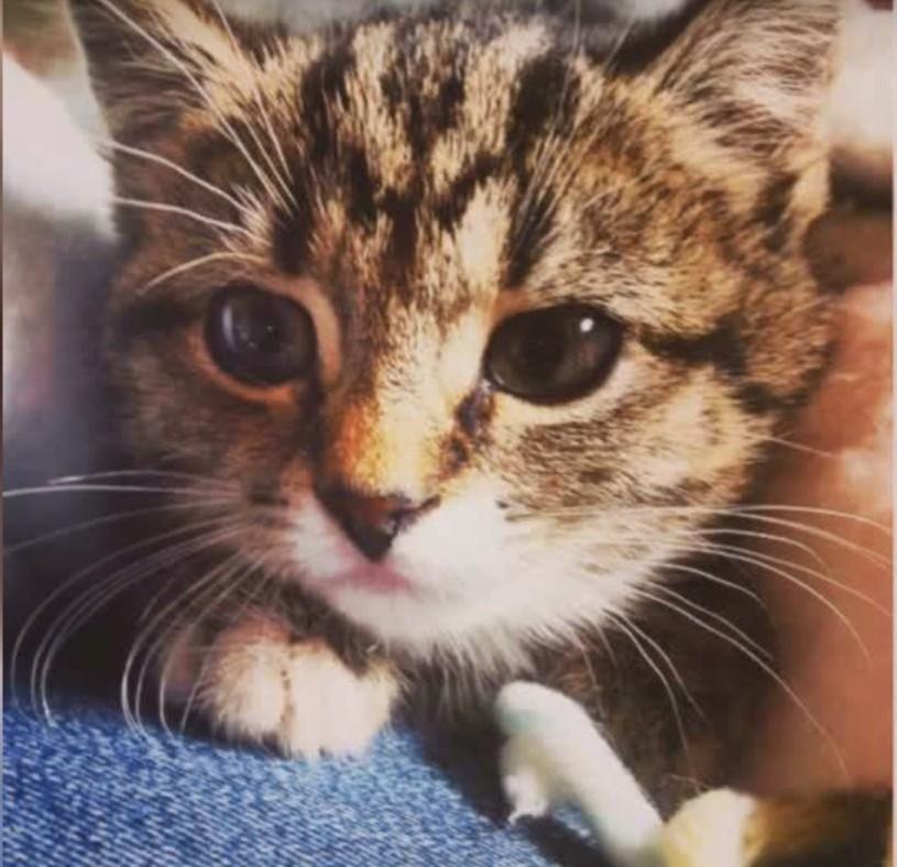 凱蒂小時候很可愛,也喜歡撒嬌,這讓不打算養寵物的丹妮爾改變了主意。(影片截圖)
