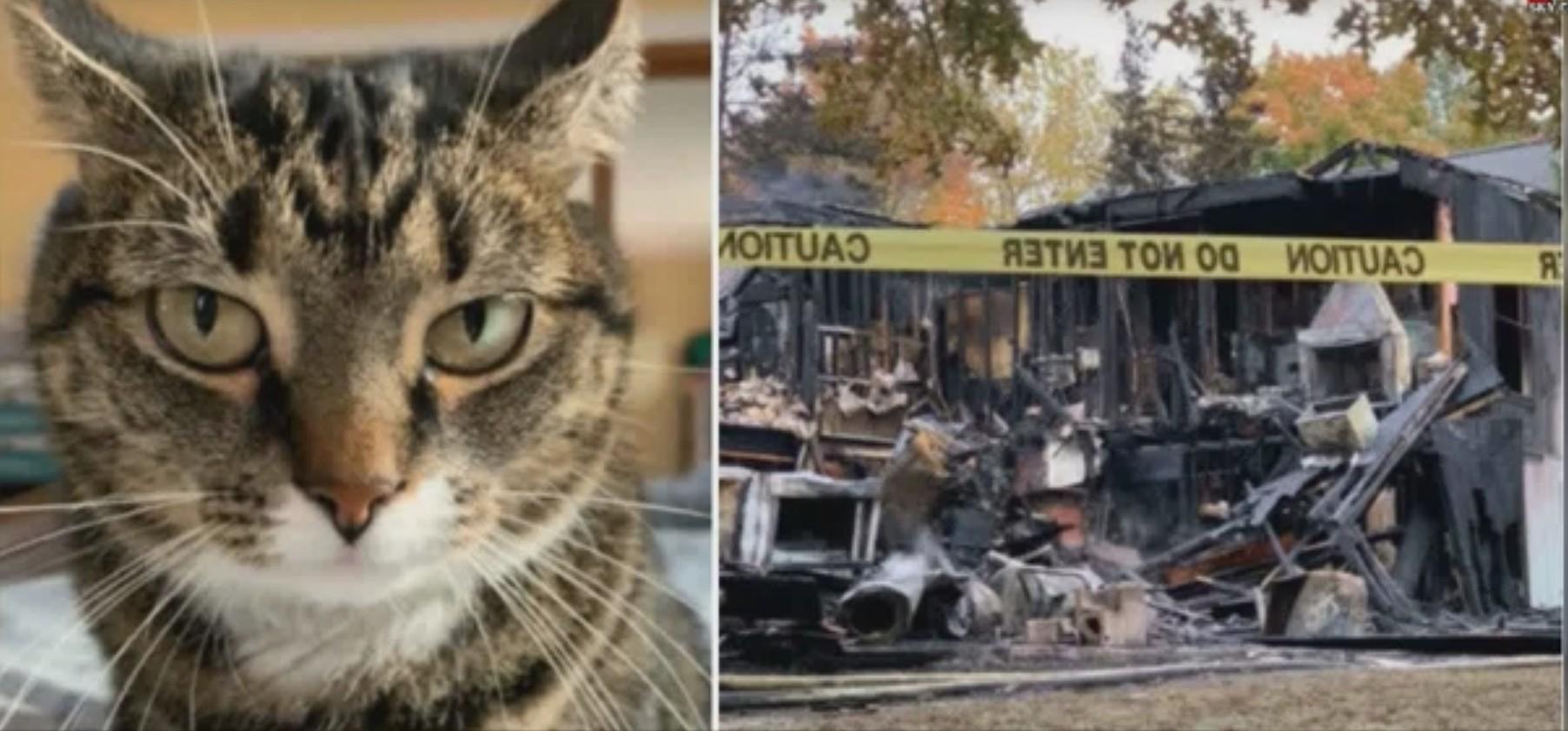 曾經被遺棄路邊的小貓獲主人收留,5年後報恩,在火災中叫醒主人,及時救了她一命。(左圖)長大後的凱蒂。(右圖)火災後,之前的房屋變成廢墟。(影片截圖)