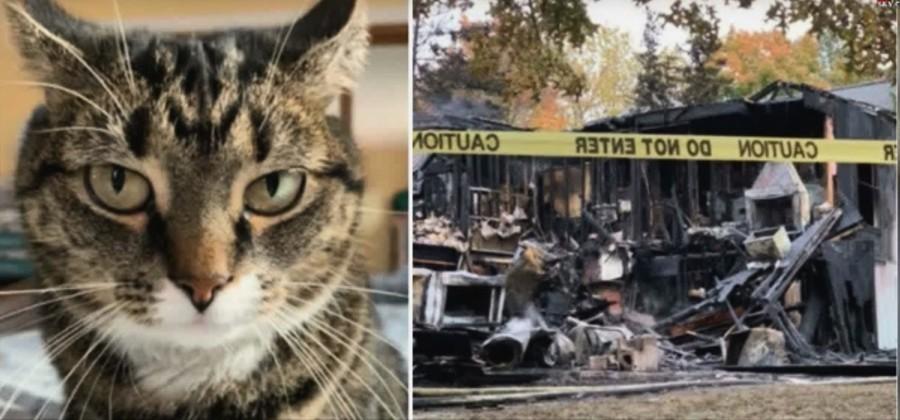 五年前獲救的貓貓報恩 大火中叫醒主人