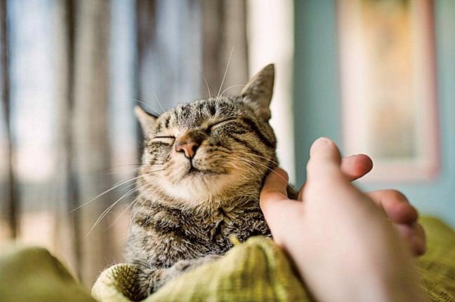 旅客願意多花一點錢來入住寵物友善酒店。