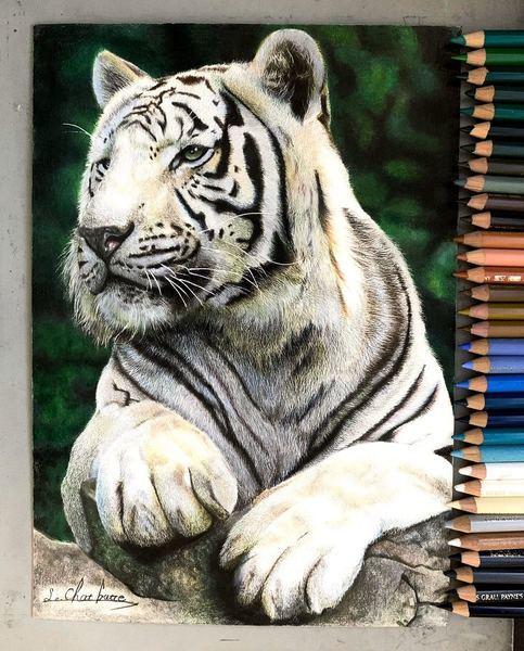高三生每天八小時苦練三年 畫出動物出神入化