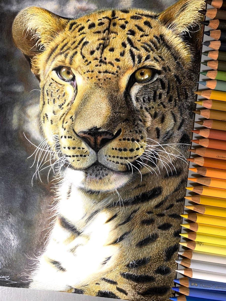 安部祐一朗就是用彩色鉛筆創作出這些栩栩如生的動物。