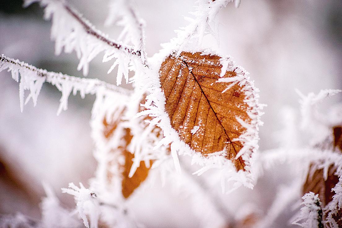 窗外開始飄起雪花,這是生平首見,興奮極了。(pixabay)