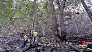 澳洲東岸大雨緩野火 珍貴松樹林幸保存