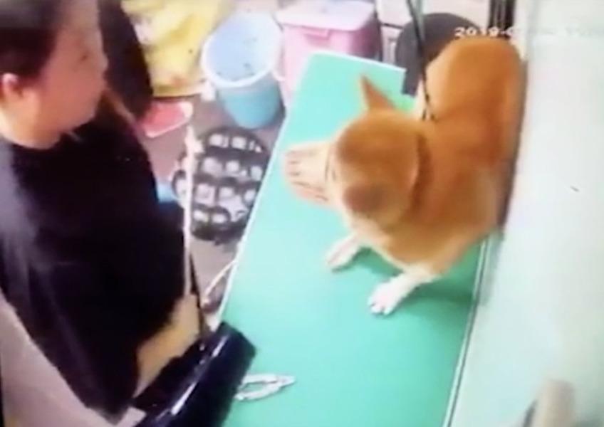 大埔寵物美容店女子涉嫌虐狗被捕