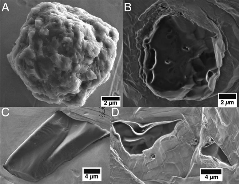 澳洲隕石含地球最古老物質