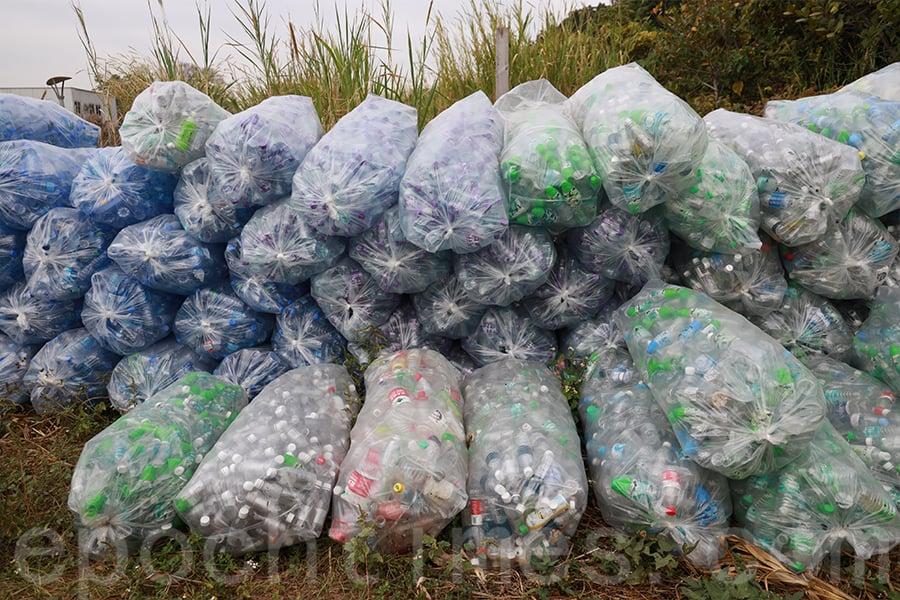 在錦田大江埔農莊,堆積如山的膠樽有兩噸,需要人手分成四類。(陳仲明/大紀元)