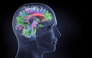 新發現人腦獨有「信號交換機制」